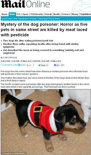 Cinco cães de uma mesma rua são mortos envenenados