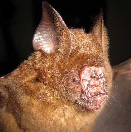 Horrenda: Cientistas descobrem criatura noturna desconhecida em parque do Vietnã