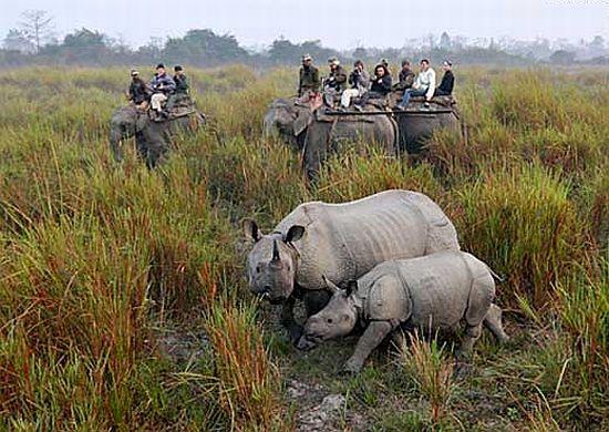 Ricaços chineses pagam R$ 229 mil para matar um rinoceronte