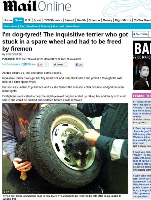 Cadela é resgatada no Reino Unido após entalar a cabeça em roda