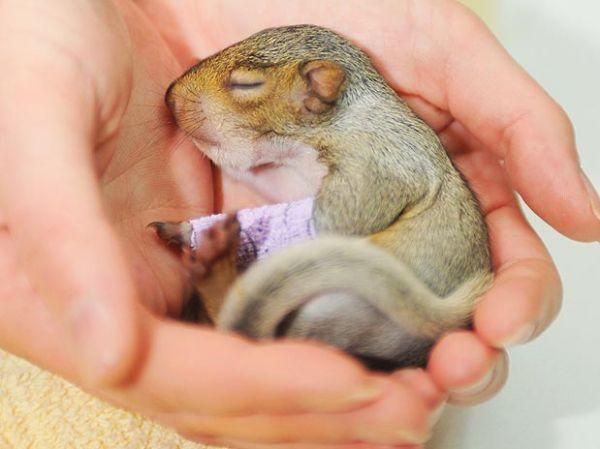 Após queda, filhote de esquilo ferido vira notícia internacional