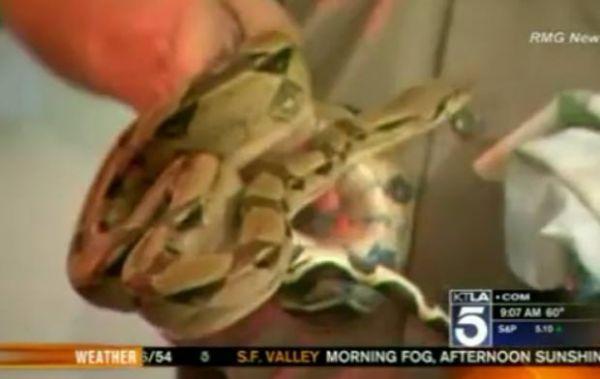 Em operação antidrogas, polícia acha bichos exóticos em casa na Califórnia