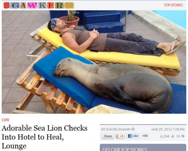 Leão-marinho fêmea é socorrida em hotel e adota local para cochilos