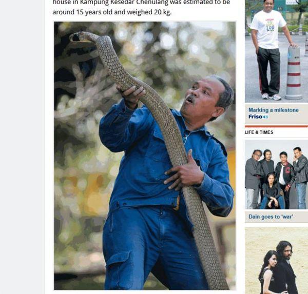 Família leva susto ao acha cobra-rei gigante na cozinha na Tailândia