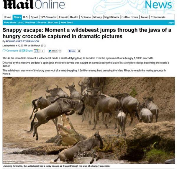 Fotógrafo flagra gnu escapando de ataque de crocodilo faminto no Quênia