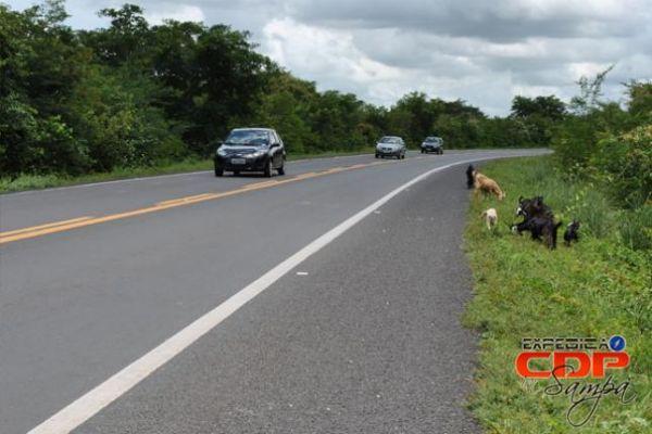 Caminhão carregado com bananas tomba após colidir com boi na BR-316