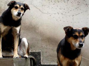 Família de casal assassinato coloca 8 cães para adoção