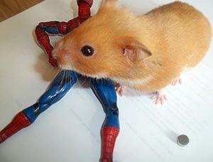 Hamster fica preso em grade de gaiola depois de engolir ímã