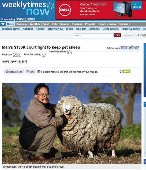 Homem trava batalha de R$ 250 mil para ficar com ovelha em casa