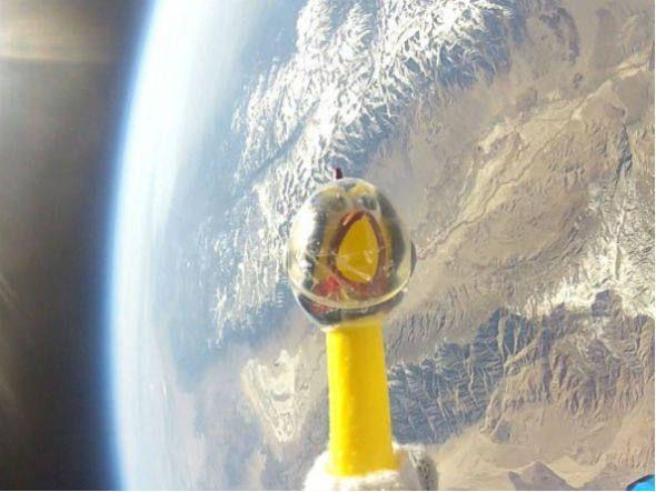 Nasa envia galinha de borracha ao espaço