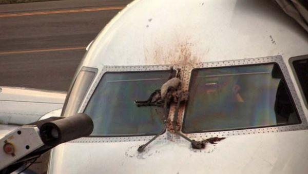 Avião faz pouso de emergência após ser atingido por gansos nos EUA