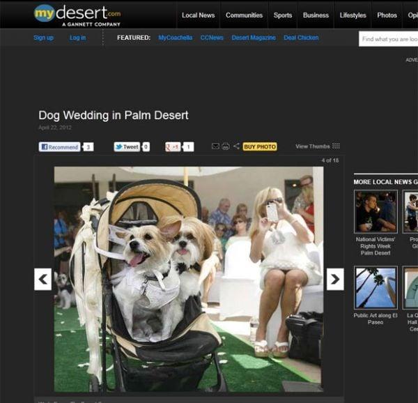 Casal de cães ganha casamento de quase R$ 10 mil na Califórnia