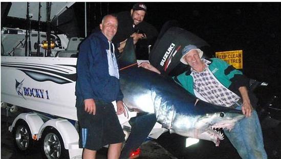 Pescadores lutam por 2 horas e 4 km para capturar tubarão na Austrália