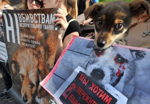 Ativistas protestam por direitos de cachorros vira-latas na Ucrânia
