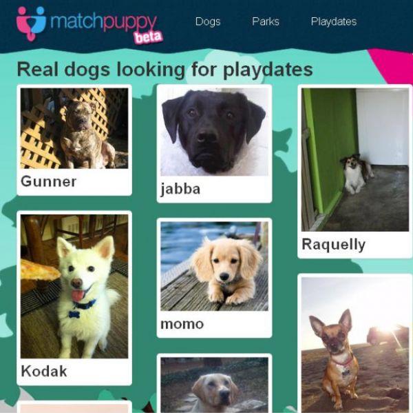 Lançada nos EUA, rede social classifica cães e incentiva o
