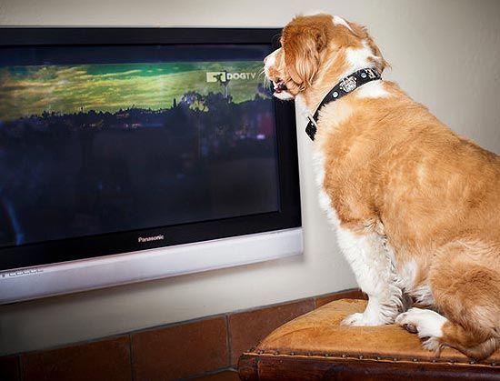 Canal pago tem programação 24 horas só para cães, nos EUA