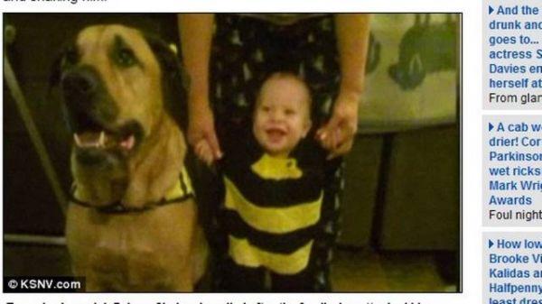 Cachorro mata bebê durante a festa de seu primeiro aniversário