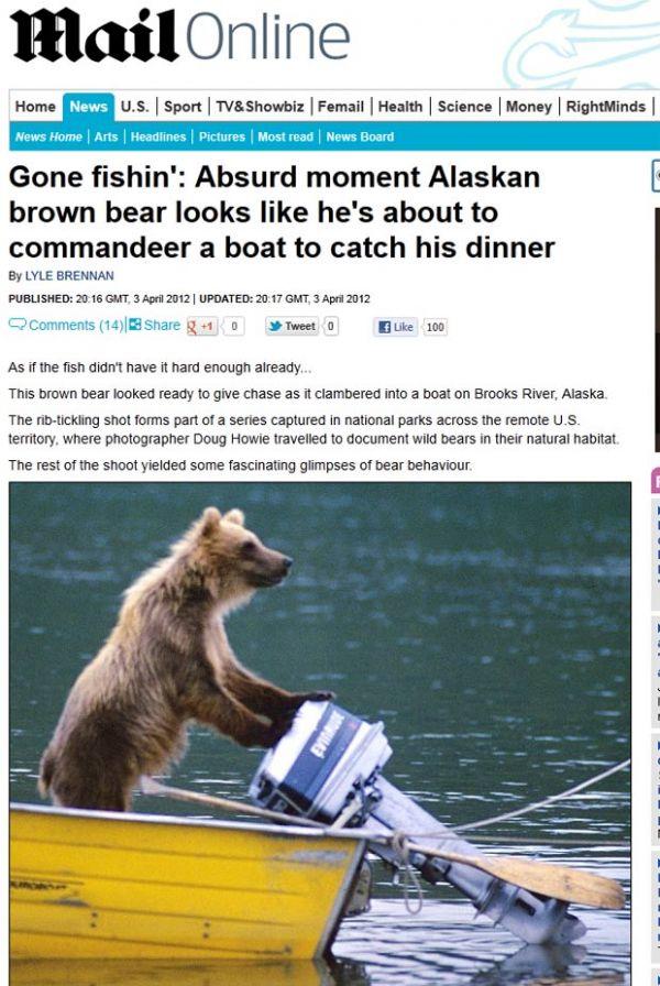 Urso é flagrado