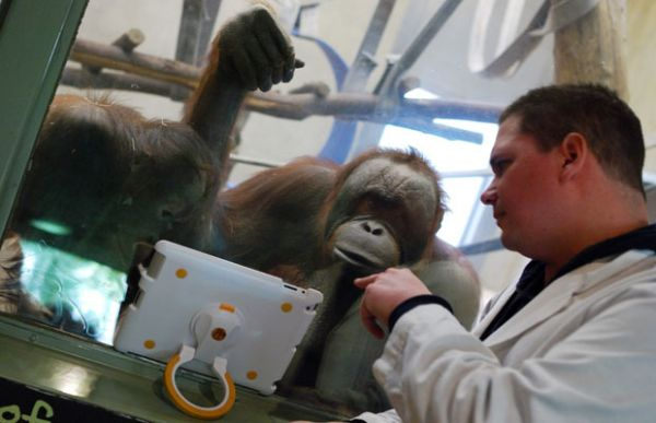 Zoológico dá iPad para macacos desenvolverem inteligência