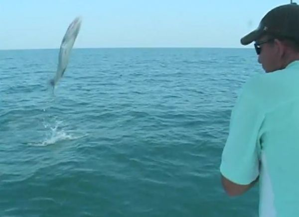 Peixe de quase 20 quilos é filmado saltando dentro de barco na Flórida