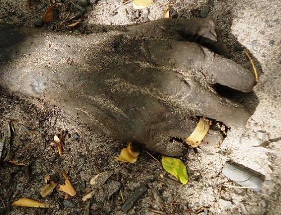 Corpo é encontrado em estado de decomposição no PI