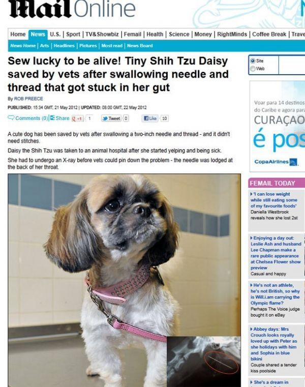 Cadela passa por cirurgia após engolir agulha de 5 cm na Inglaterra