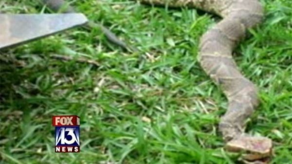 Cadela vira heroína após enfrentar cobra venenosa para proteger dona
