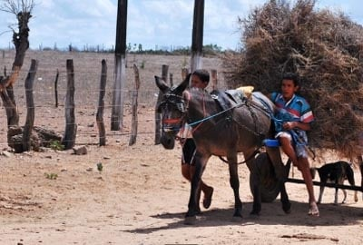 Municípios vítimas da seca lideram ranking de piores índices