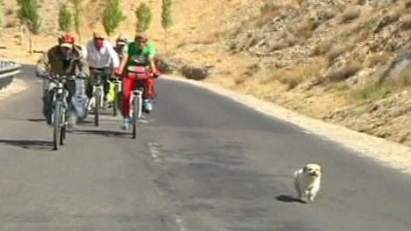 Cachorro sem dono corre 1,7 mil quilômetros ao lado de ciclistas