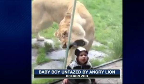 Separada por vidro, leoa tenta abocanhar menino em zoo nos EUA