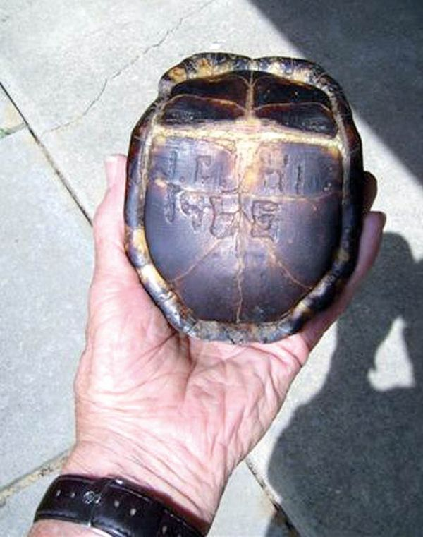 Americano acha tartaruga com iniciais do filho 47 anos depois