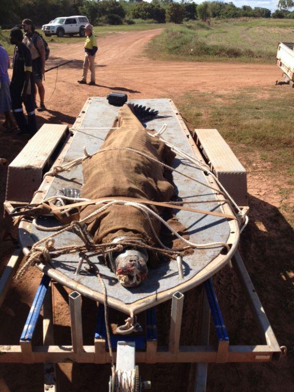 Crocodilo que era ameaça a cães de estimação é capturado na Austrália