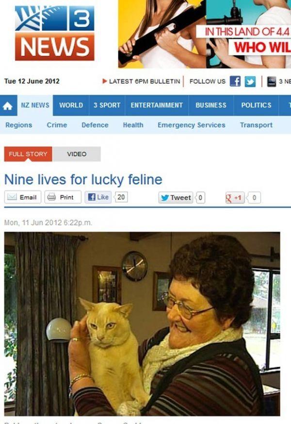 Gato escapa ileso após ser atropelado a 100 km/h na Nova Zelândia