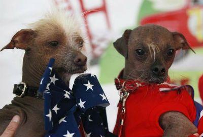Cão mais feio do mundo será eleito em concurso no dia 22