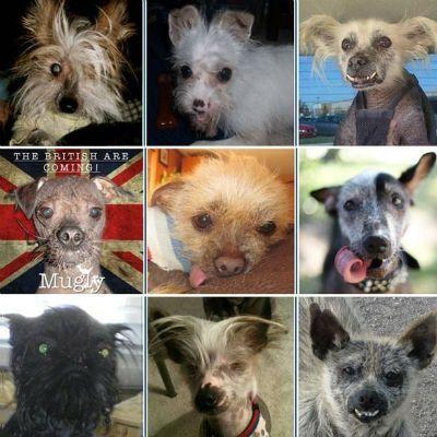 Cão mais feio do mundo será eleito nesta sexta-feira; veja 19 concorrentes