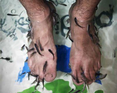 Iraque ganha salão com peixes que fazem trabalho de manicure e pedicure
