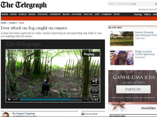 Inglês flagra cervo atacando cachorro em floresta