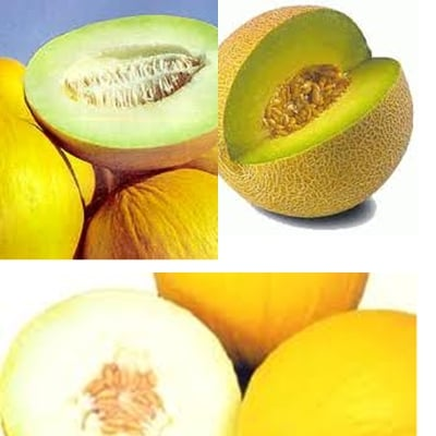 Governador Wilson Martins visitou Projeto produtor e exportador de Melão, melancia, tomate e etc.