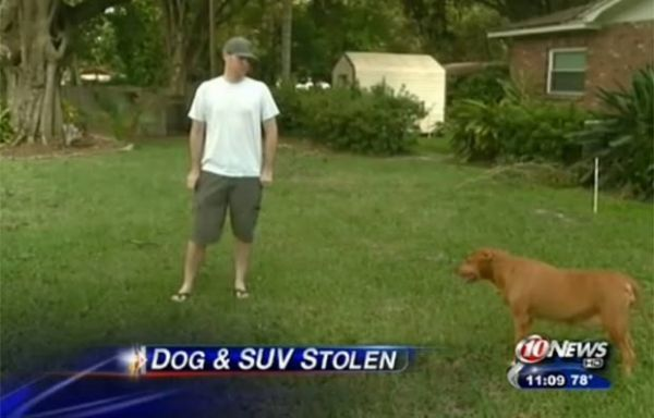 Americano US$ 5 mil na tentativa de recuperar cadela roubada