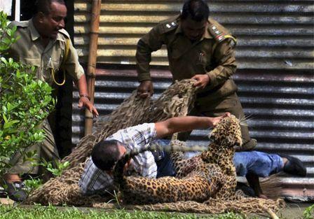 Leopardo invade área residencial, fere 13 pessoas e é morto a tiros por seguranças