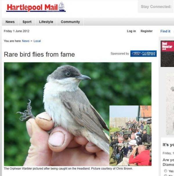 Passarinho raro atrai atenção de mais de 2 mil observadores de pássaros