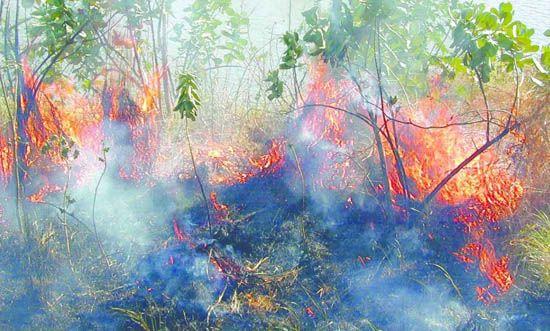Focos de incêndio aumentam 137%
