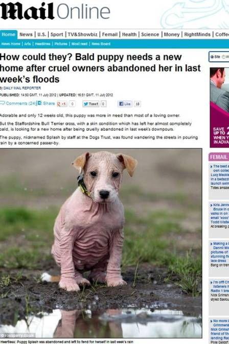 Cadelinha careca é abandonada e espera novo lar