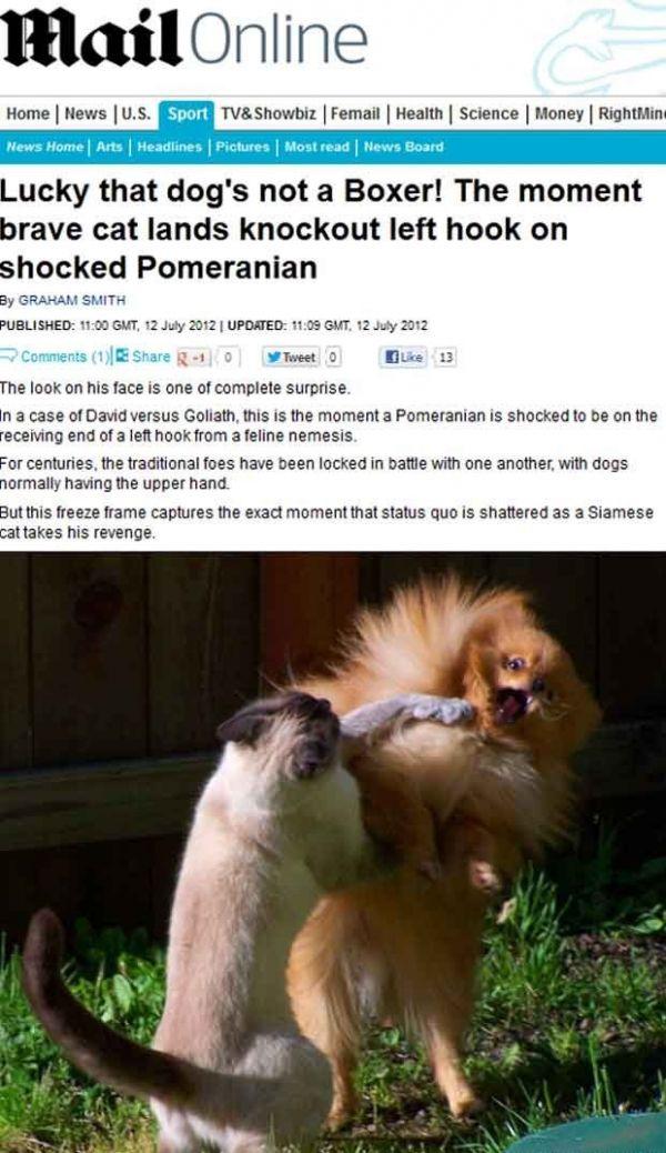Gato e cachorro são flagrados