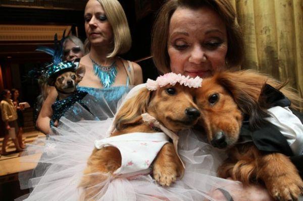 Trajes de gala no casamento de cães fazem sucesso