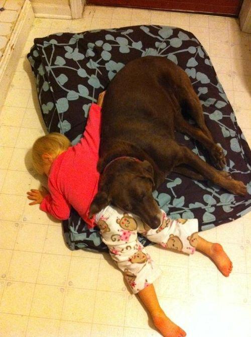 10 posições bizarras â?? e muito engraçadas â?? de cachorros dormindo