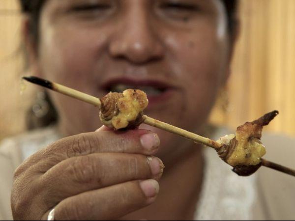 Equatorianos se alimentam de larva de besouro assada no espeto