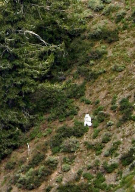 Homem se veste de cabra para pastar em montanha com animais selvagens nos EUA