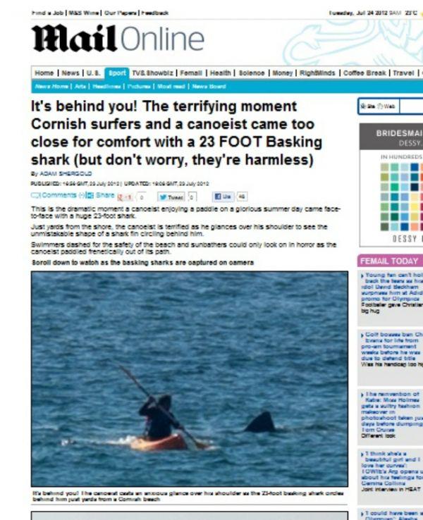 Tubarão causa pânico em praia e surpreende por não comer carne humana