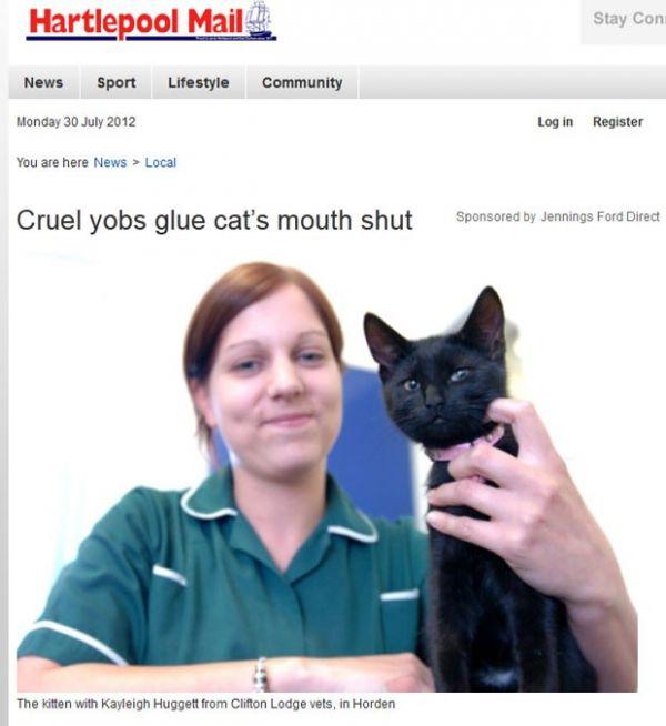 Gatinho é encontrado com a boca colada no Reino Unido